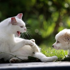 schwierige Gespräche anpacken