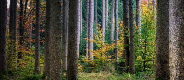 Waldbaden, ein analoges Abenteuer